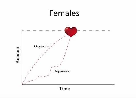 Female Hormone Graph