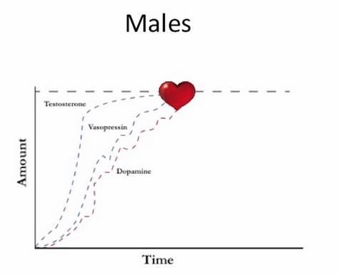 Male Hormone Graph